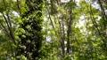 翠綠 鮮綠 森林 77459318