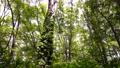 翠綠 鮮綠 森林 77459319