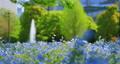 花朵 花 花卉 77471174