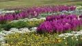 Early summer flower garden and Kuju mountain range (zoom out) 77476961