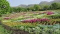 Early summer flower garden and Kuju mountain range (pan) 77476964