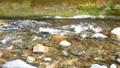 日本・埼玉県・秩父の川辺風景。秩父のあしがくぼ・横瀬川の流れ。5月の風景。 77512791