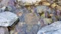 日本・埼玉県・秩父の川辺風景。秩父のあしがくぼ・横瀬川の流れ。5月の風景。 77512795