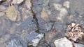 日本・埼玉県・秩父の川辺風景。秩父のあしがくぼ・横瀬川の流れ。5月の風景。 77512798