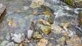 日本・埼玉県・秩父の川辺風景。秩父のあしがくぼ・横瀬川の流れ。5月の風景。 77512801