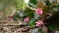 vegetation, vegetative, spring 77522877