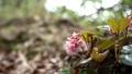 vegetation, vegetative, spring 77522942
