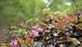 vegetation, vegetative, spring 77522944
