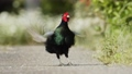 bird, birds, fowls 77528284