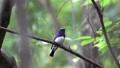野生鳥類 野鳥 小鳥 77536773