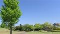 藍天 公園 城市 77553711