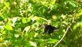 bug, butterfly, butterflies 77579988