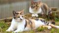animal, animals, cat 77579992