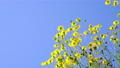 花朵 花卉 花 77587307