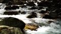 mountain stream, mountain torrent, river 77643467