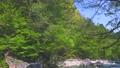 river, clear stream, mountain stream 77671800
