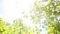 新緑の葉 植物 背景 樹木 落葉樹 77772202