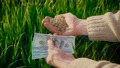 Hands of adult farmer holding wheat grains and dollar banknotes in palm. Barley after good harvest 78075714