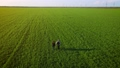 Young happy loving couple walking outdoors in agricultural field with green crops and talking with each other at sunset 78075716