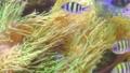 Underwater algae and fish in them. 78164888