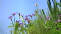 꽃, 플라워, 식물 78199085