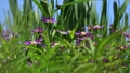 꽃, 플라워, 식물 78199088