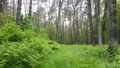 Wild forest landscape on a summer day 78211955