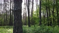 Wild forest landscape on a summer day 78211957