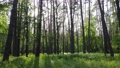 Wild forest landscape on a summer day 78211959