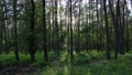 Wild forest landscape on a summer day 78211962