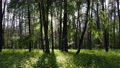Wild forest landscape on a summer day 78211964