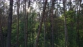 Wild forest landscape on a summer day 78211965
