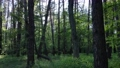 Wild forest landscape on a summer day 78211967