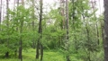 Wild forest landscape on a summer day 78211968