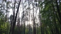 Wild forest landscape on a summer day 78211984