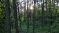 Wild forest landscape on a summer day 78211986