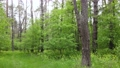 Wild forest landscape on a summer day 78211987