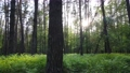 Wild forest landscape on a summer day 78211989
