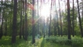 Wild forest landscape on a summer day 78211991