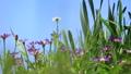 꽃, 플라워, 식물 78293540