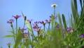 꽃, 플라워, 식물 78293542