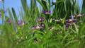 꽃, 플라워, 식물 78293543