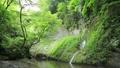 新緑の由布川渓谷(音あり) 78407753