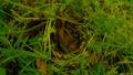 Bird incubates eggs in the nest 78461154
