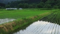 6月の田んぼに降る雨 田植え 梅雨 農業 78651201