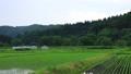 6月の田んぼに降る雨 田植え 梅雨 農業 78651202