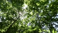 In the forest where the fresh green leaves sway beautifully in the wind 78656660
