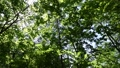 In the forest where the fresh green leaves sway beautifully in the wind 78656665
