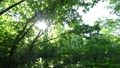 In the forest where the fresh green leaves sway beautifully in the wind 78656668