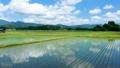 空撮 秋田県の田園風景 6月 快晴 水が張った水田 田植え 日本 78714281